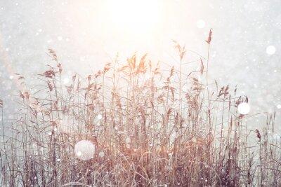 Adesivo Fundo borrado do inverno, flocos de neve da grama seca