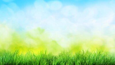 Adesivo fundo da grama