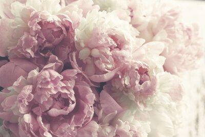Adesivo Fundo de flores peônias rosa fofo