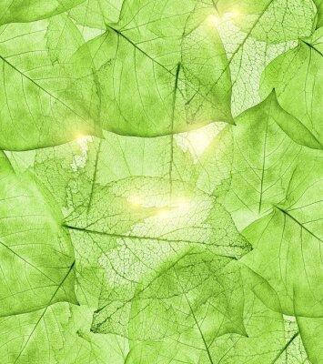 Adesivo fundo de folhas verdes escuras