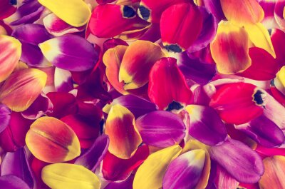 Adesivo Fundo de tulipas de pétalas