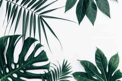 Adesivo Fundo moderno e tropical. Folhas sobre fundo branco