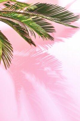 Adesivo Fundo pastel tropical de verão com palm