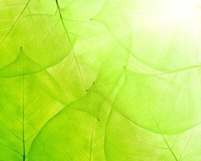 Adesivo fundo verde das folhas finas