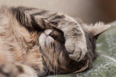 Adesivo gato do sono