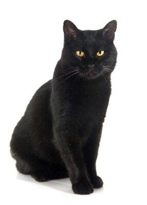 Adesivo gato preto