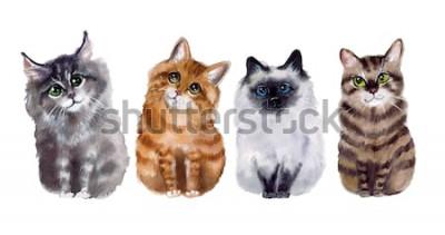 Adesivo Gatos engraçados bonitos da aquarela no fundo branco