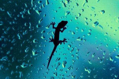 Adesivo Gecko On Glass Window Wet With Rain Drops