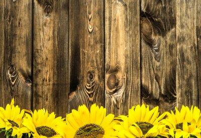 Adesivo Girassóis em placas de madeira velhas. Flores de fundo com espaço da cópia