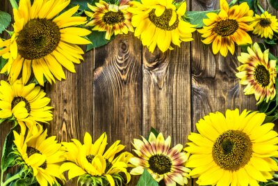 Adesivo Girassóis no fundo de madeira rústico. Flores fundos.