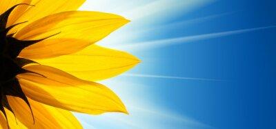 Adesivo Girassol sol no fundo do céu azul