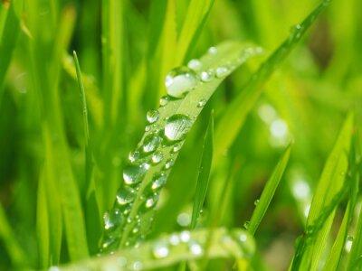 Adesivo gotas nas folhas