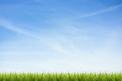 Adesivo Grama grama sob o céu azul e nuvens