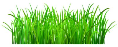 Adesivo Grama verde