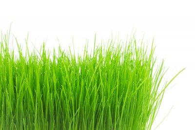 Adesivo Grama verde fresca