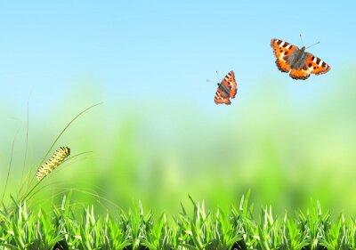Adesivo Grama verde, lagarta e borboleta