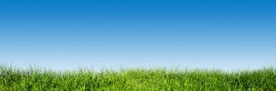 Adesivo Grama verde no céu azul claro, a primavera do tema da natureza. Panorama