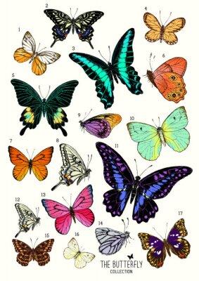Adesivo Grande coleção de borboletas, conjunto desenhado mão isolated.Vector ilustração