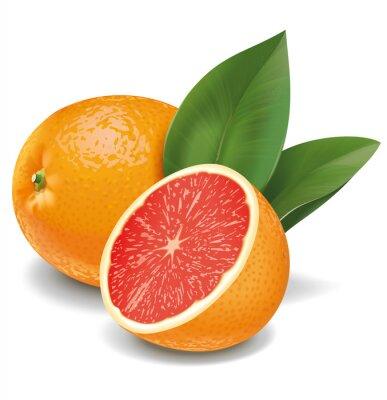 Adesivo Grapefruit ilustração