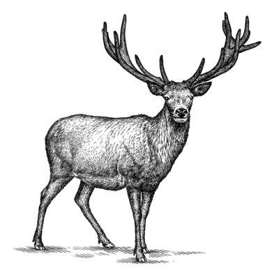 Adesivo Gravar cervos ilustração