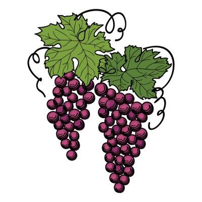 Adesivo Gravura de uvas no ramo sobre fundo branco