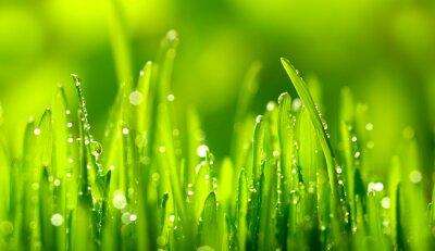 Adesivo Green Grass