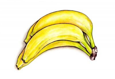 Adesivo Grupo das bananas isoladas no fundo branco. Ilustração da aguarela