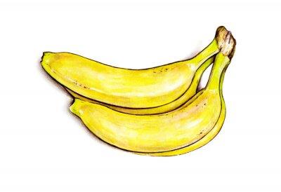 Adesivo Grupo das bananas isoladas no fundo branco. Ilustração da aguarela. Fruta tropical