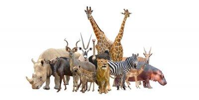 Adesivo grupo de animais áfrica
