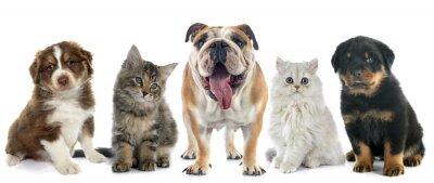 Adesivo Grupo de animais de estimação