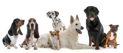 Adesivo Grupo de cachorros