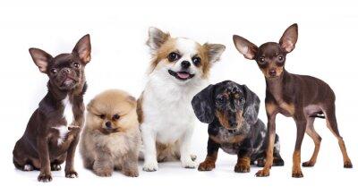 Adesivo Grupo, pequeno, decorativo, cão, companions