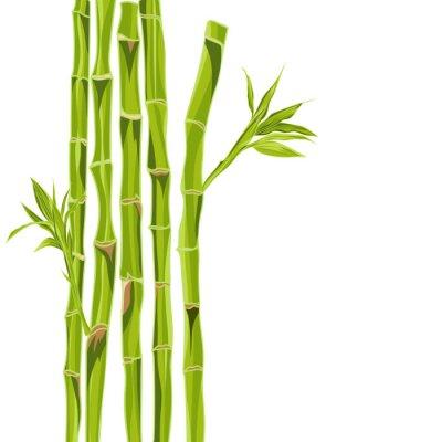 Adesivo Hand-drawn bacground de bambu verde com espaço para o texto