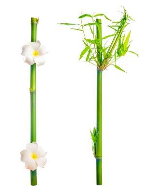Adesivo hastes de bambu com folhas e flor frangipani é isolado em