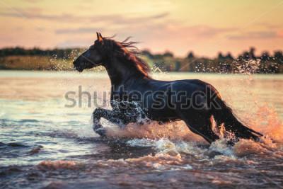 Adesivo Horse