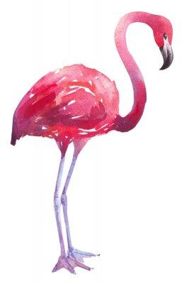 Adesivo Ilustração da aguarela de um flamingo