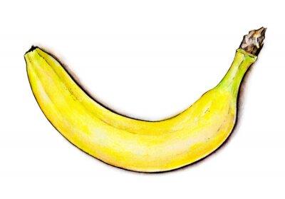 Adesivo Ilustração da aguarela. Fruta tropical
