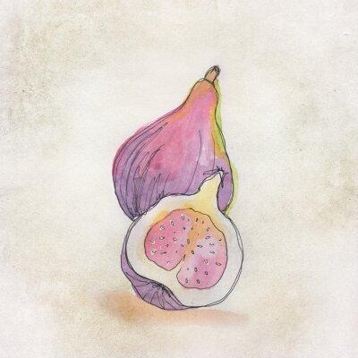 Adesivo Ilustração da fruta com a aguarela