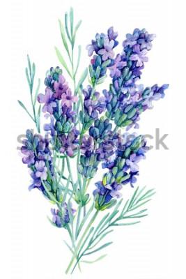 Adesivo ilustração de flores de lavanda buquê em aquarela sobre fundo branco isolado