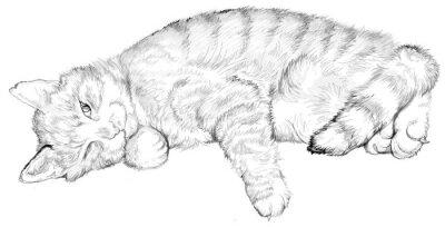Ilustracao De Um Gato Do Sono Desenho Preto E Branco Desenho