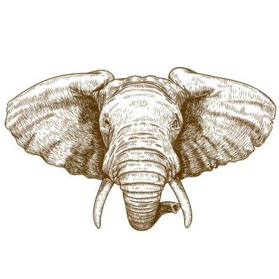 Adesivo ilustração do vetor de cabeça de elefante gravura