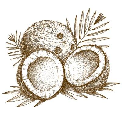 Adesivo Ilustração gravura de folha de coco e de palma