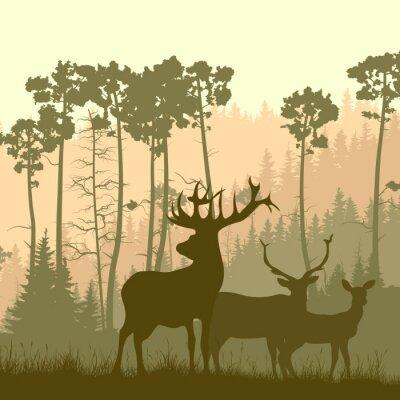 Adesivo Ilustração quadrada de alces selvagens na borda da floresta.