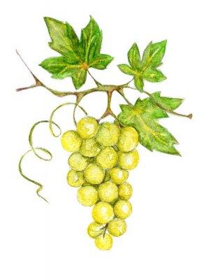 Adesivo Ilustração - uvas verdes