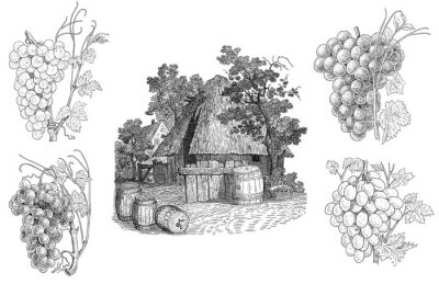 Adesivo Ilustração Vineyard