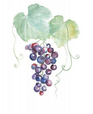Adesivo Ilustrações tiradas mão da aguarela de uvas roxas