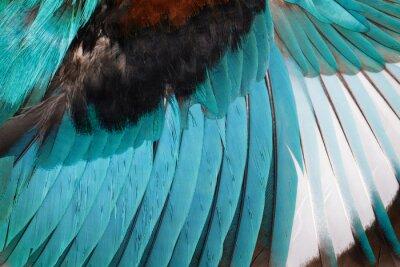 Adesivo Imagem das asas branco-throated do martinho pescatore em um fundo branco. Pássaro. Animal.