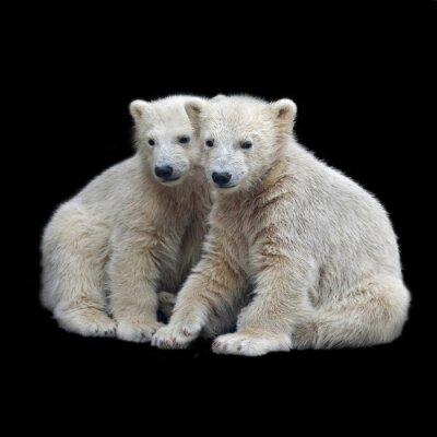 Adesivo Irmandade de filhotes de urso polar
