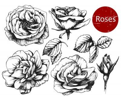 Adesivo Jogo de rosas desenhadas mão altamente detalhadas. Vetor