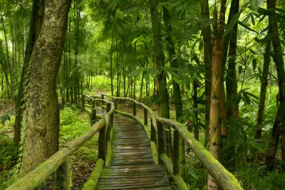 Adesivo Jungla de Tailândia com ponte de madeira